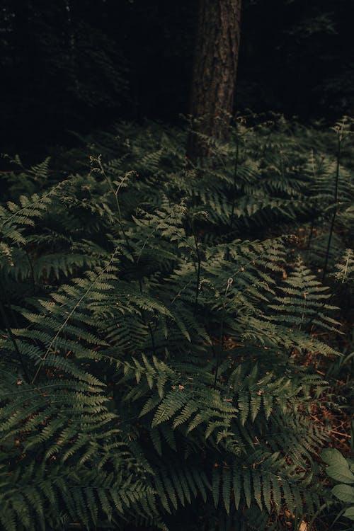 Immagine gratuita di ambiente, arbusto, biologia, boschi