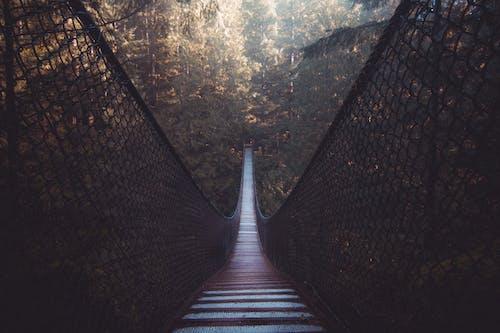 Immagine gratuita di albero, altezza, ambiente