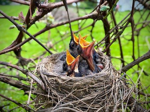 Black and Orange Bird on Nest