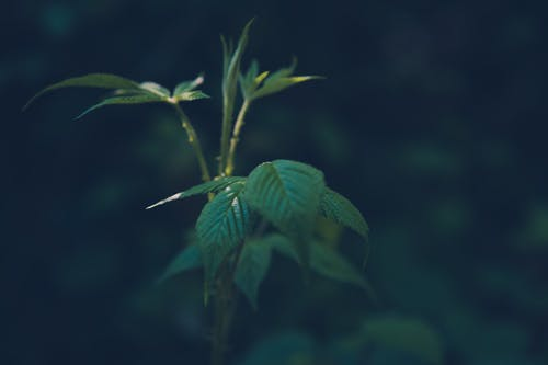 Free stock photo of bush