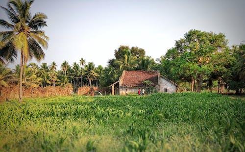 Darmowe zdjęcie z galerii z boiska, opuszczony dom, pola