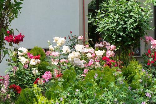 Бесплатное стоковое фото с белый, дом, заводы, зелень