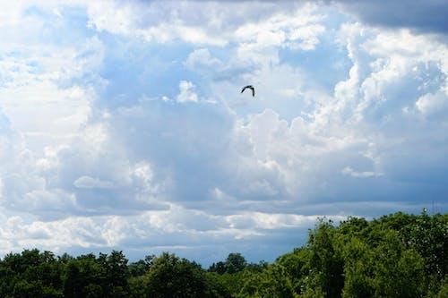 Бесплатное стоковое фото с деревья, летящая птица, облачное небо, пейзаж