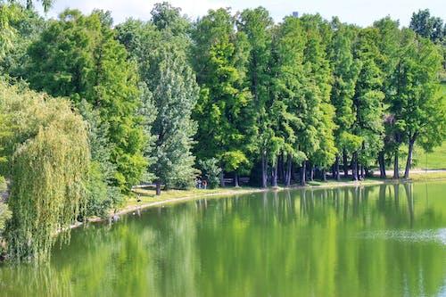 Бесплатное стоковое фото с деревья, листья, люди, озеро