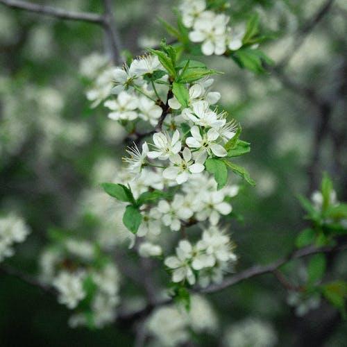 Free stock photo of blossom, blossom flora, close up focus