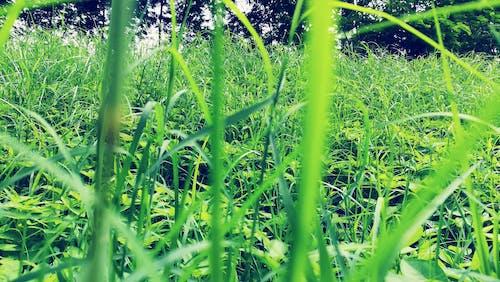 Foto stok gratis agrikultura, alam, bidang, Daun-daun