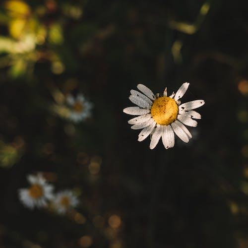 Darmowe zdjęcie z galerii z aromat, biały, botanika, centrum