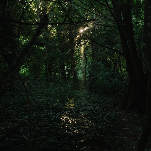 Fotos de stock gratuitas de al aire libre, anochecer, árbol