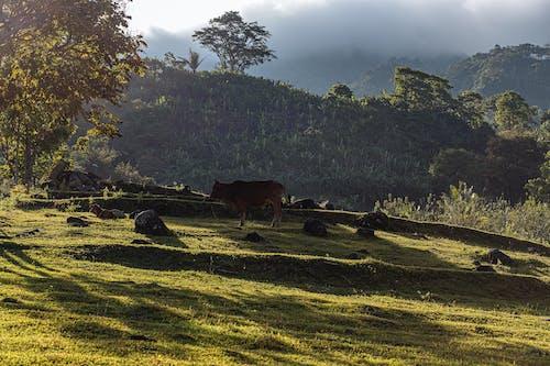 Foto d'estoc gratuïta de paisatge