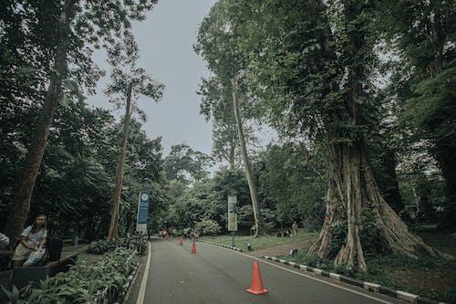 가벼운, 거리, 경치, 공원의 무료 스톡 사진