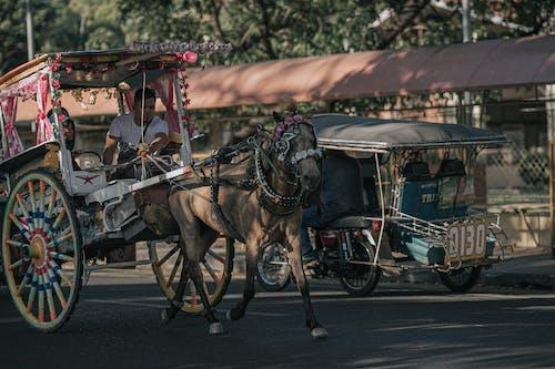 Immagine gratuita di carro, cavallo