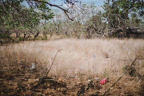 광야, 황무지, 황야의 무료 스톡 사진