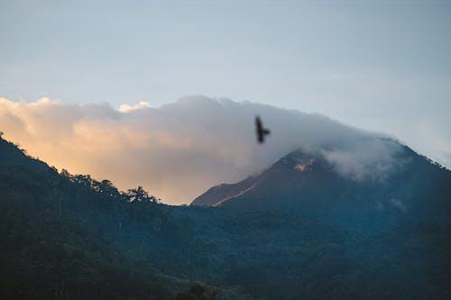 Immagine gratuita di cielo sereno, nuvole, uccello
