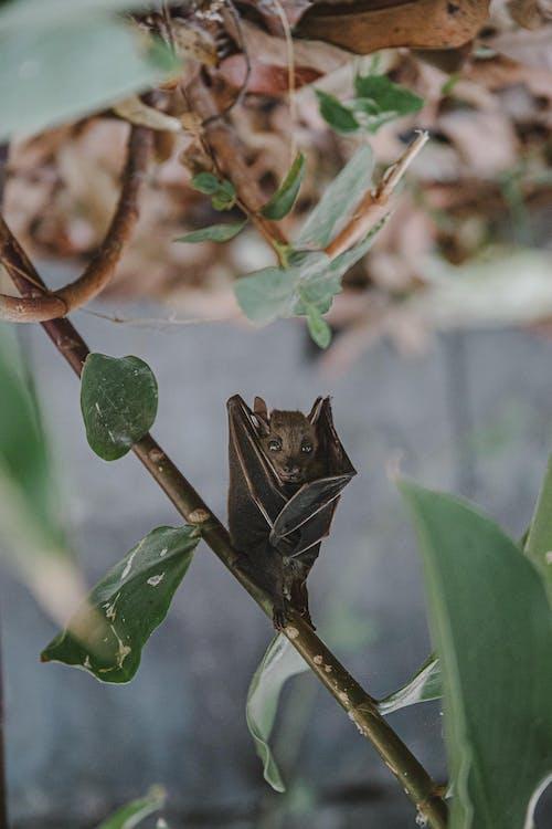 Free stock photo of bat, nature
