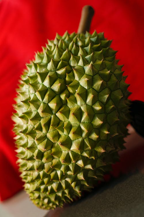 From above of ripe exotic Asian fruit durian with barbed peel and strong odor near red fabric