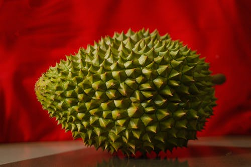 Fresh prickly durian on red background