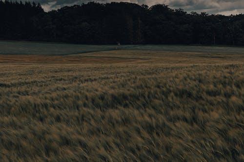 Immagine gratuita di albero, ambiente, atmosfera, boschi