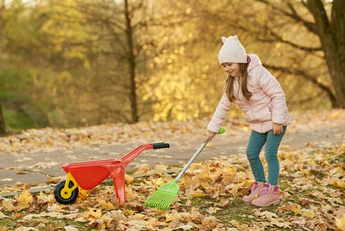Girl Playing on Autumn Leaves with Her Plastic Toys Rake and Wheel Barrow