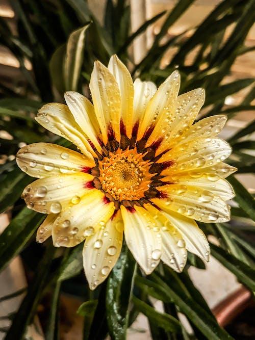 Free stock photo of flower, lightroom, mobilechallenge, photographe nature