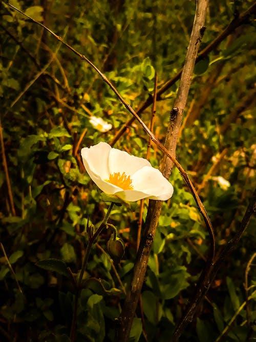 Free stock photo of beautiful flower, natural, photographer