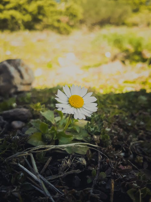 Free stock photo of beautiful flowers, lonely, photographer