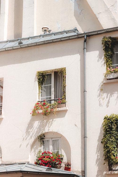 Immagine gratuita di abitare, appartamento, architettura