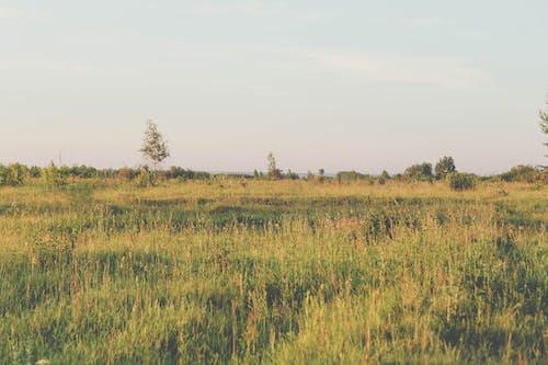 Δωρεάν στοκ φωτογραφιών με ανακαλύπτω, γήπεδο, καλοκαίρι, καλοκαιρινό λουλούδι