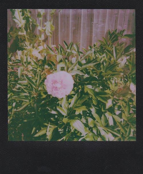 ağaç, Aşk, buket, çiçek içeren Ücretsiz stok fotoğraf