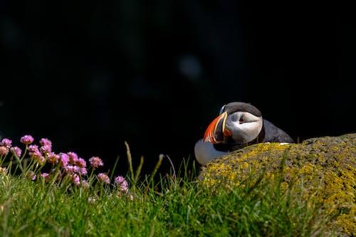 Безкоштовне стокове фото на тему «барвистий, вродлива, делікатний, дика природа»