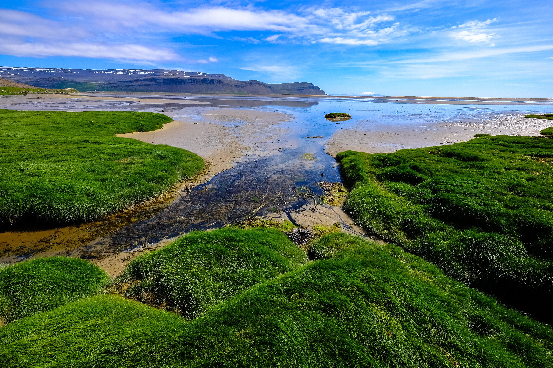 Top View of Green Grass Near Seashore