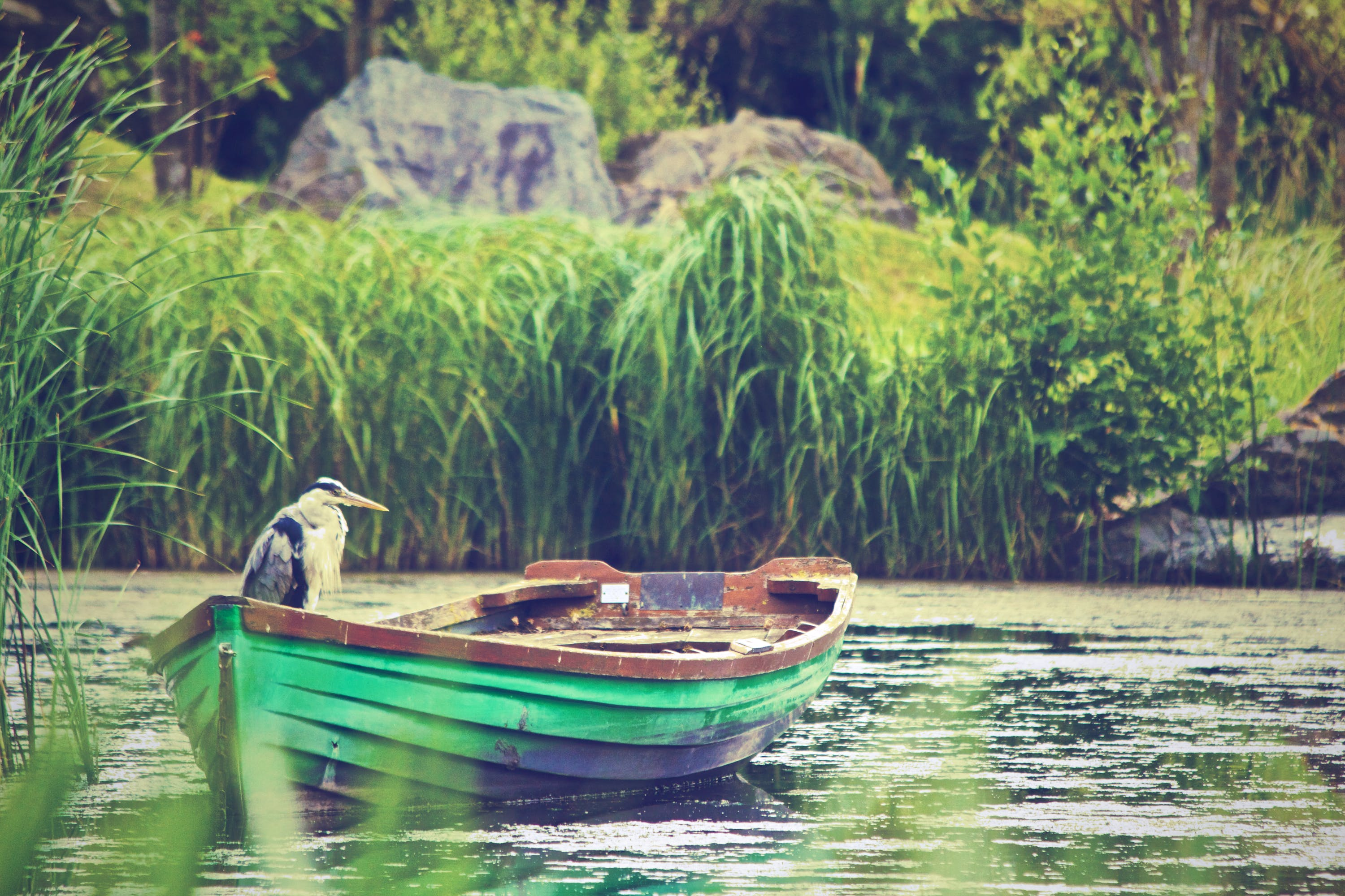 Selective Focus Photography of Great Blue Heron Standing on Green and Brown Rowboat on Calm Body of Water
