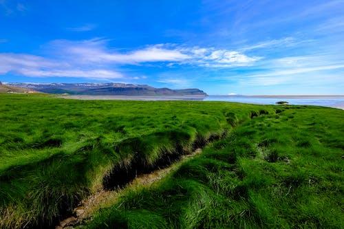 Základová fotografie zdarma na téma farma, hora, horizont, hřiště