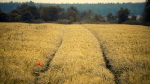 Photos gratuites de agriculture, automne, blé, campagne