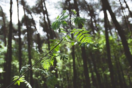 Foto profissional grátis de árvores, filial, floresta, galho