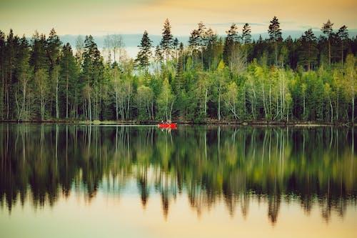 Scenic view of lush abundant forest near calm lake