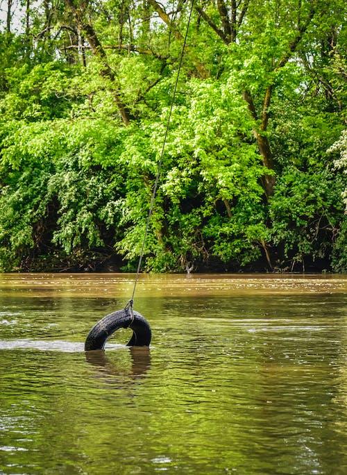 Foto d'estoc gratuïta de a l'aire lliure, aigua, arbre, billar