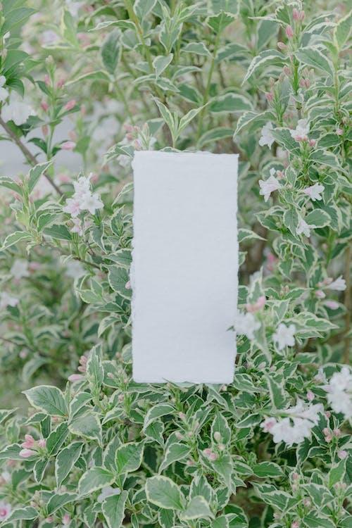 White Printer Paper on Green Plant