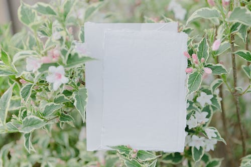 White Paper on Pink Flowers