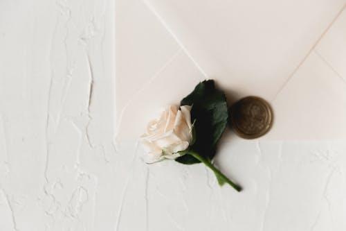 White Rose on White Table