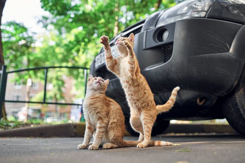 Orange Tabby Cat on Gray Asphalt Road