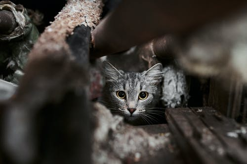 Silver Tabby Cat on Brown Wooden Log