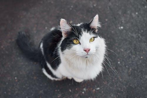 White and Black Cat on Black Floor