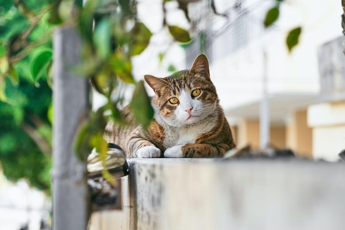 Brown Tabby Cat on White Bucket