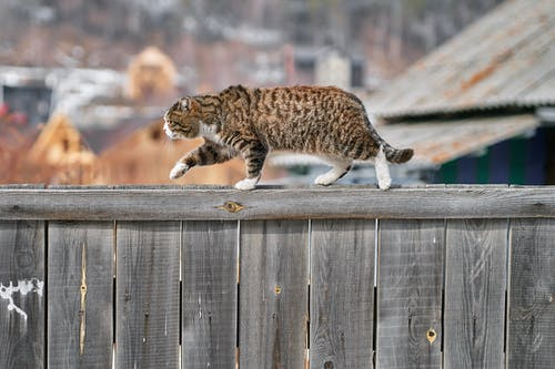 Brown Tabby Cat on Wooden Fence