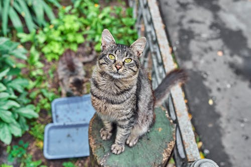 Brown Tabby Cat on Brown Wooden Seat