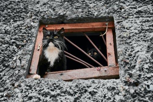 Tuxedo Cat on Brown Wooden Frame