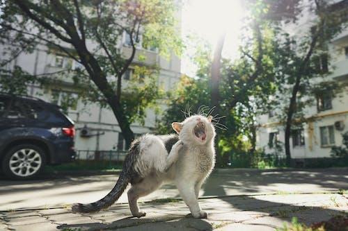 White and Gray Cat on Gray Concrete Floor