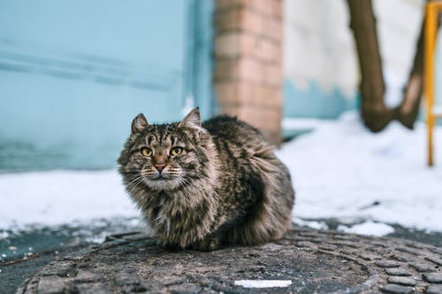 Brown Tabby Cat on Gray Concrete Surface