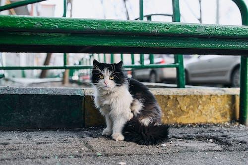 Tuxedo Cat Sitting on Concrete Floor
