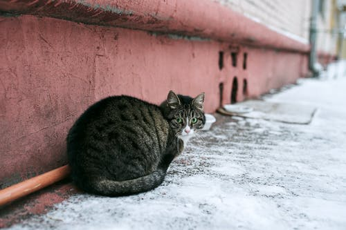 Brown Tabby Cat on Snow Covered Ground